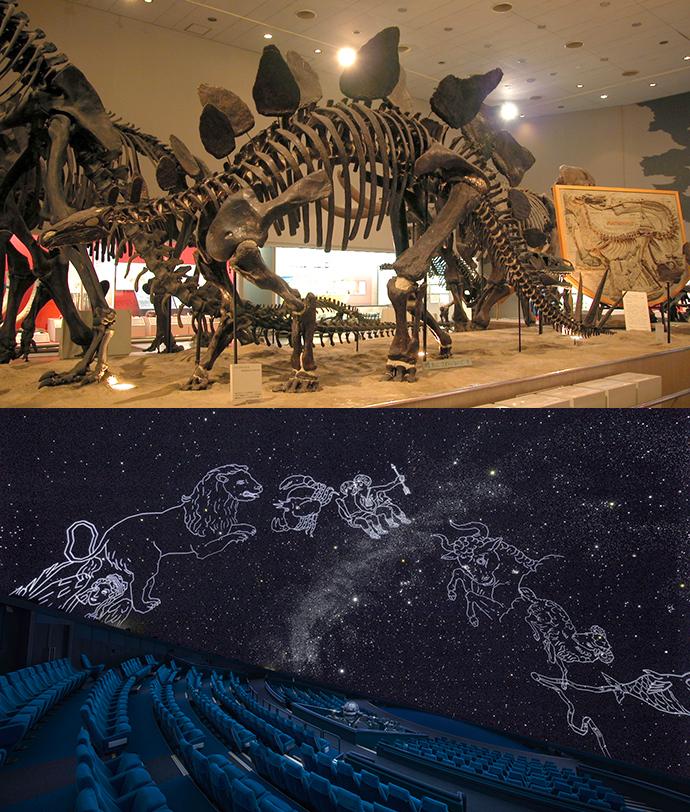 プロジェクトミーティング「これからの自然科学・博物館と市民」